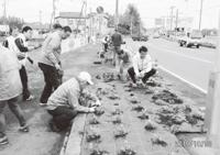国道・県道沿いの花壇に皆で花の苗を植えよう